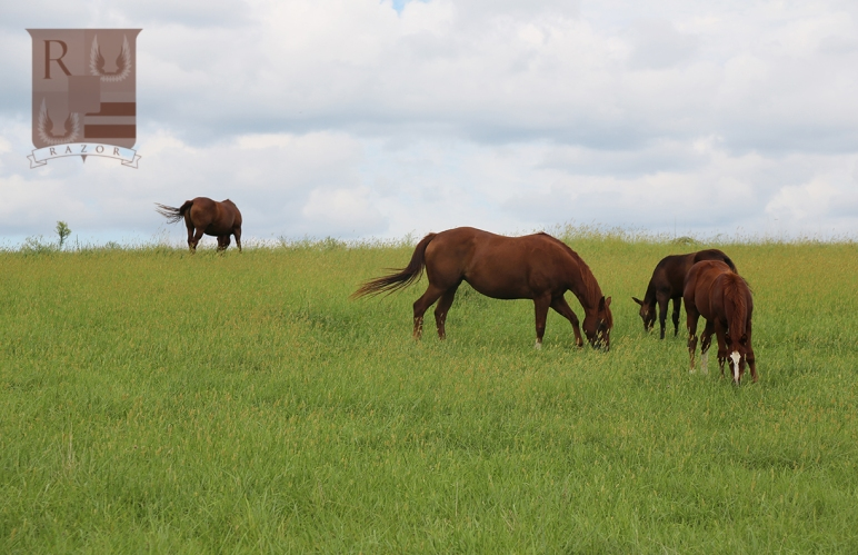 pretty horses grazing in summer